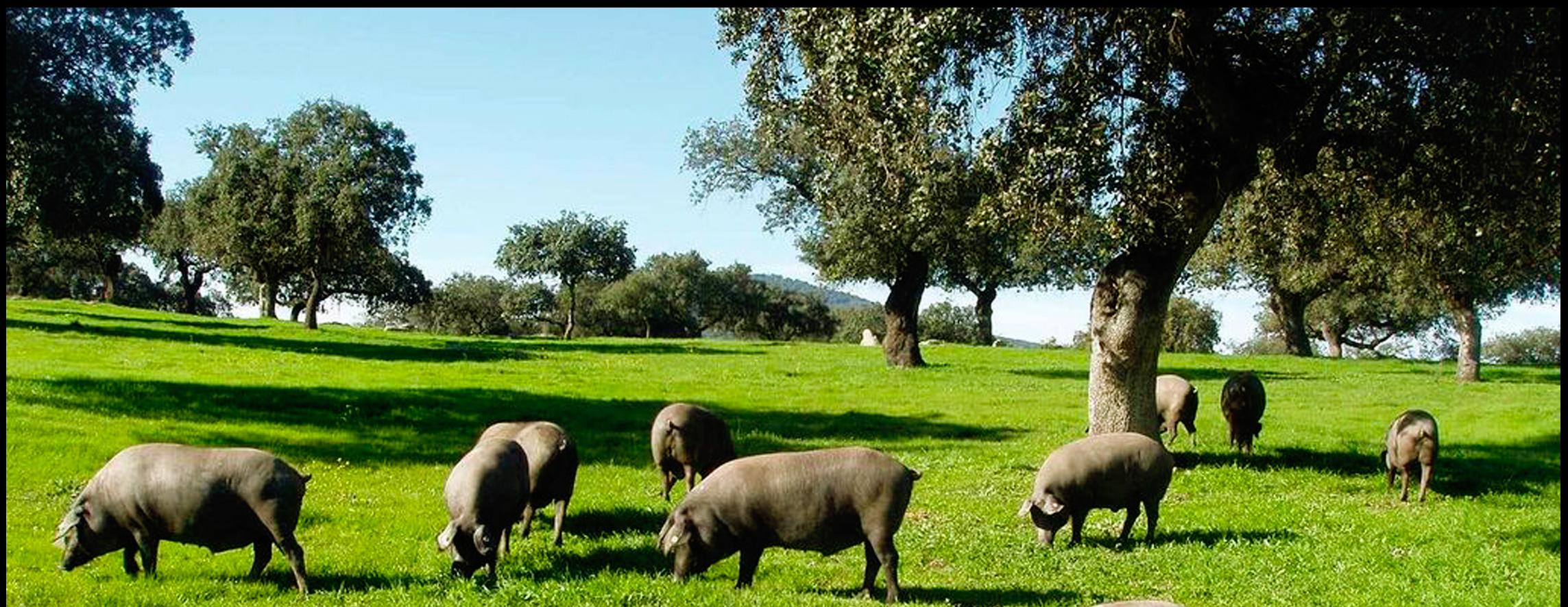 Acheter jambon de bellota espagnol en ligne